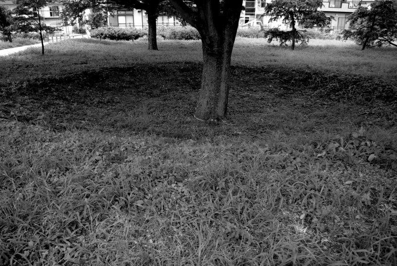 4994_PENTAX K10D        _2009-08-18 13-02-16.JPG